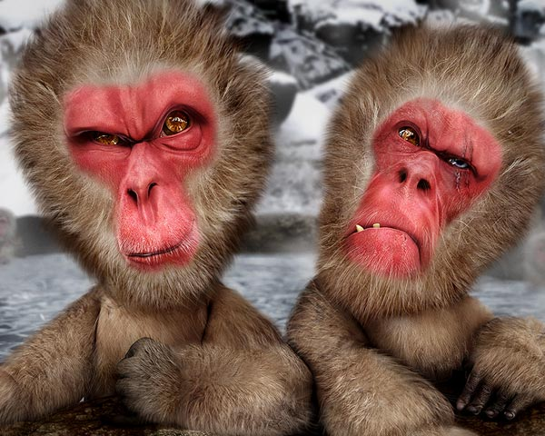 Hey dude are you looking at me - caricature of 2 japanese macaques with a challenge expression on their faces. modeling and rendering in lightwave, postprod in photoshop
